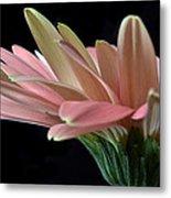 Delicate Petals. Metal Print