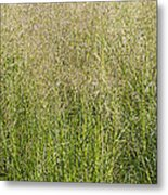 Delicate Tall Grasses Metal Print