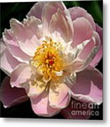 Delicate Touch  Metal Print