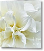 Delicate White Softness Metal Print