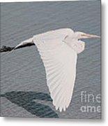 Delicate Wings In Flight Metal Print