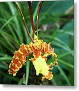 Delicate Yellow Spider Orchid Metal Print