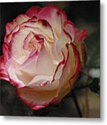 Delicately Yours  Metal Print