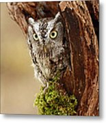 Delighted By The Eastern Screech Owl Metal Print by Inspired Nature Photography Fine Art Photography