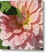 Delightful Smile Dahlia Flower Metal Print