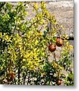 Delphi Pomegranate Metal Print
