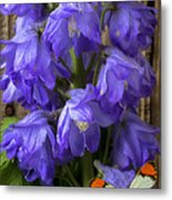Delphinium And Butterfly Metal Print