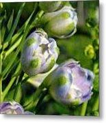 Delphinium Buds Blooming Metal Print