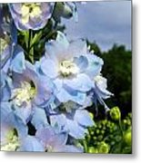 Delphinium With Cloud Metal Print
