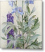 Delphiniums Metal Print by James Valentine Jelley