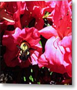 Delving Into Sweetness Metal Print