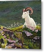 Denali Dall Sheep Metal Print