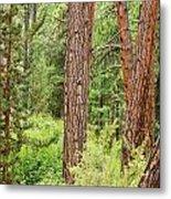 Dense Forest View Metal Print