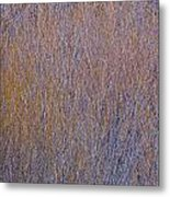 Dense Thicket Of Coyote Willow In Winter Along The Truckee River Metal Print