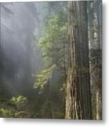 Depth Of Forest Metal Print
