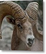 Desert Big Horn Metal Print
