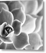 Desert Center Metal Print