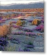 Desert In Bloom Metal Print