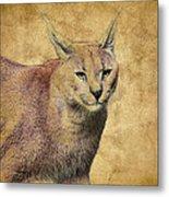 Desert Lynx Metal Print