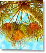 Desert Palm Metal Print