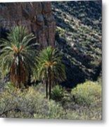 Desert Palms Metal Print