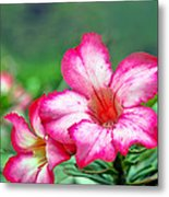 Desert Rose At Kualoa Metal Print