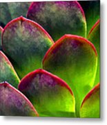 Desert Succulent In Bright Sun And Shade Metal Print