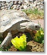 Desert Tortoise Delight Metal Print