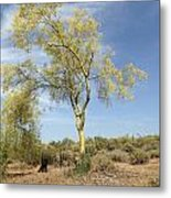Desert Tree Metal Print by Janice Sakry