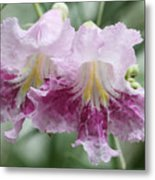 Desert Willow Metal Print