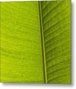 Detail Of Banana Leaf Andromeda Metal Print