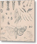 Details Of The Perfect Insect Metal Print