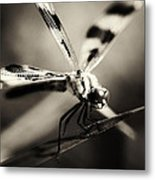 Determined Dragonfly Metal Print