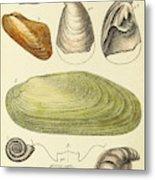 Devonian Fossils, Illustration Metal Print