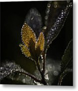 Dew Drops And Crystals Metal Print