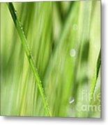 Dew Drops In Long Sunlit Grass Metal Print by Natalie Kinnear