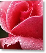 Dew Drops On Pink Metal Print