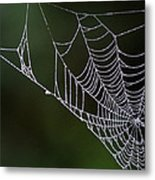 Dew In Early Morning Light Metal Print