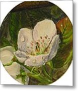 Dew Of Pear's Blooms Metal Print