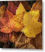 Dew On Autumn Leaves Metal Print