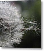 Dew On Dandelion Metal Print