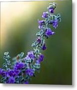 Dew On Fower Metal Print