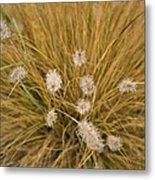 Dew On Ornamental Grass No. 3 Metal Print