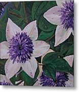 Clematis After The Rain Metal Print