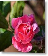 Dew Rose Metal Print