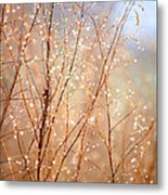 Dewdrop Morning Metal Print