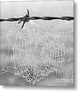 Dewdrops Metal Print
