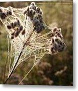 Dewdrops On A Web Metal Print