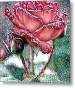 Dewey Rose Metal Print