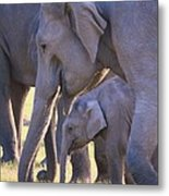 Dhikala Elephants Metal Print